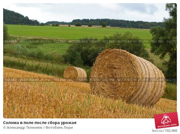 Солома в поле после сбора урожая, фото № 102960, снято 27 марта 2017 г. (c) Александр Телеснюк / Фотобанк Лори