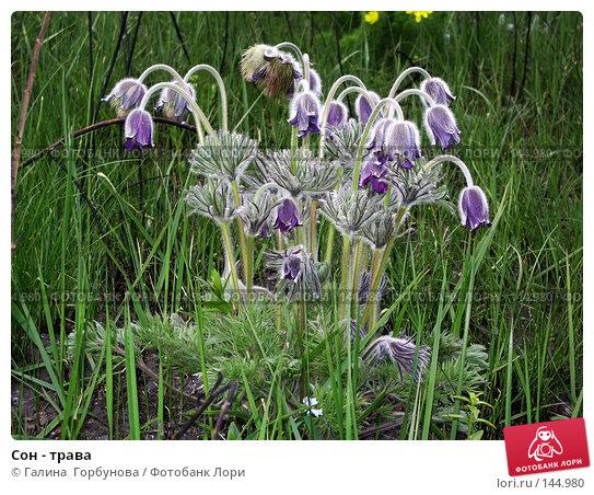 Сон - трава, фото № 144980, снято 19 апреля 2006 г. (c) Галина  Горбунова / Фотобанк Лори