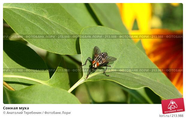 Купить «Сонная муха», фото № 213988, снято 28 июля 2007 г. (c) Анатолий Теребенин / Фотобанк Лори