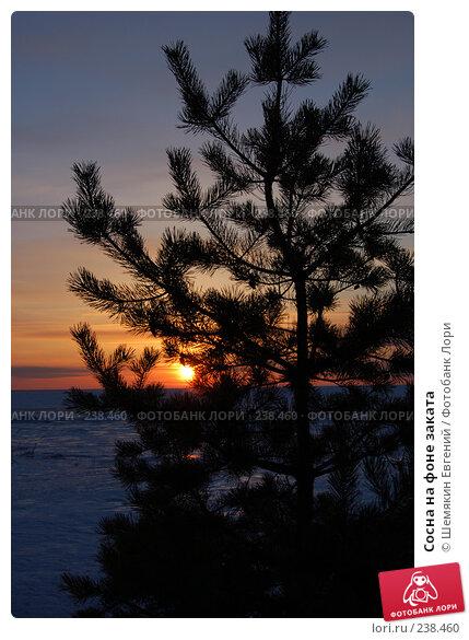 Купить «Сосна на фоне заката», фото № 238460, снято 21 ноября 2017 г. (c) Шемякин Евгений / Фотобанк Лори
