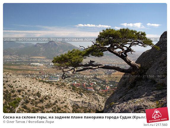Купить «Сосна на склоне горы, на заднем плане панорама города Судак (Крым)», фото № 217560, снято 18 сентября 2006 г. (c) Олег Титов / Фотобанк Лори
