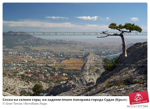 Сосна на склоне горы, на заднем плане панорама города Судак (Крым), фото № 217564, снято 18 сентября 2006 г. (c) Олег Титов / Фотобанк Лори