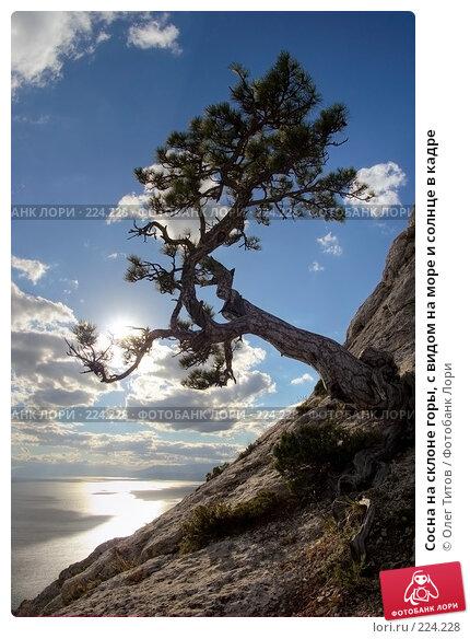 Сосна на склоне горы, с видом на море и солнце в кадре, фото № 224228, снято 24 августа 2017 г. (c) Олег Титов / Фотобанк Лори