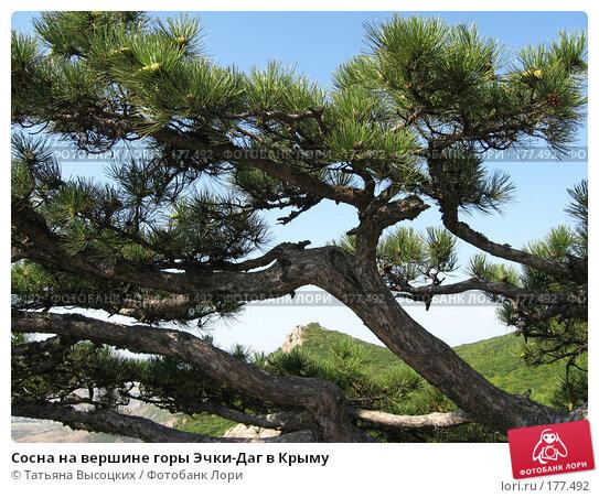 Сосна на вершине горы Эчки-Даг в Крыму, фото № 177492, снято 27 августа 2007 г. (c) Татьяна Высоцких / Фотобанк Лори