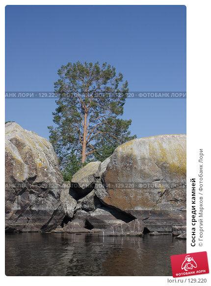 Сосна среди камней, фото № 129220, снято 4 августа 2006 г. (c) Георгий Марков / Фотобанк Лори