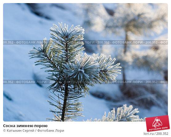 Купить «Сосна зимнею порою», фото № 200352, снято 6 января 2008 г. (c) Катыкин Сергей / Фотобанк Лори