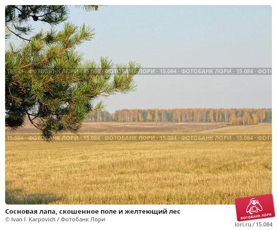 Купить «Сосновая лапа, скошенное поле и желтеющий лес», фото № 15084, снято 1 октября 2005 г. (c) Ivan I. Karpovich / Фотобанк Лори