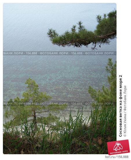 Сосновая ветка на фоне моря 2, фото № 156888, снято 5 апреля 2005 г. (c) Юлия Ухина / Фотобанк Лори