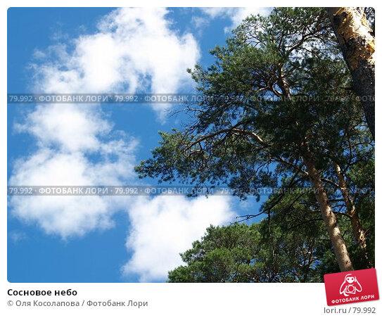Сосновое небо, фото № 79992, снято 22 июля 2007 г. (c) Оля Косолапова / Фотобанк Лори