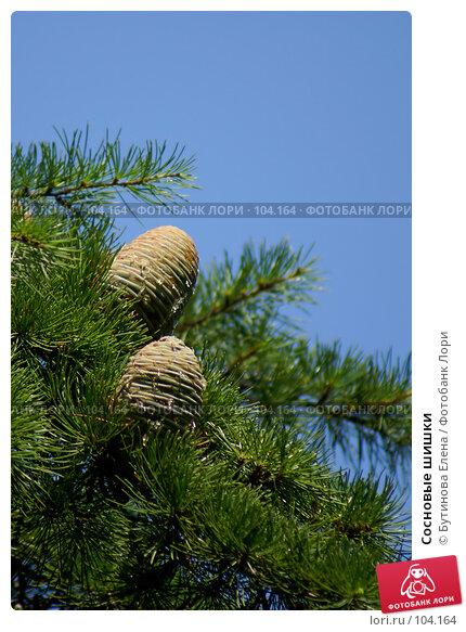 Купить «Сосновые шишки», фото № 104164, снято 19 апреля 2018 г. (c) Бутинова Елена / Фотобанк Лори