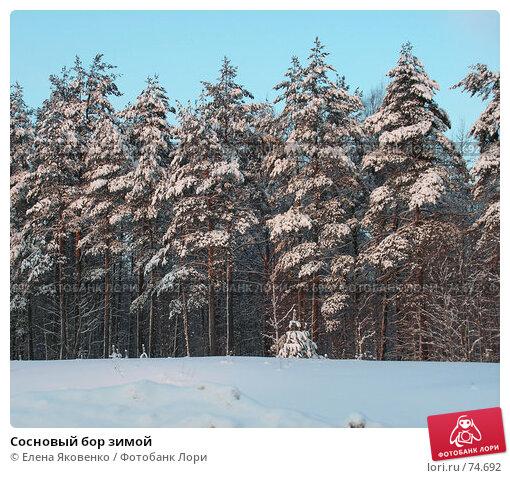 Сосновый бор зимой, фото № 74692, снято 23 июня 2005 г. (c) Елена Яковенко / Фотобанк Лори