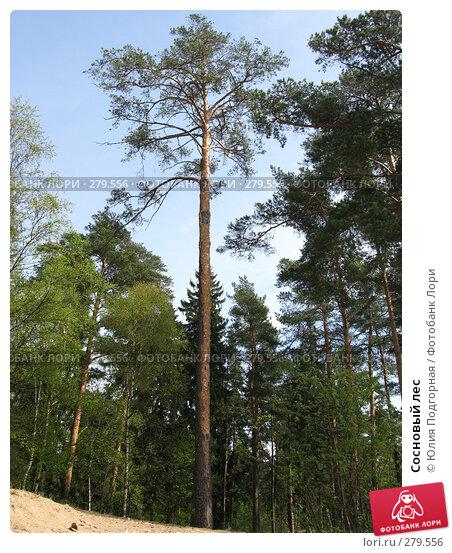 Купить «Сосновый лес», фото № 279556, снято 10 мая 2008 г. (c) Юлия Селезнева / Фотобанк Лори