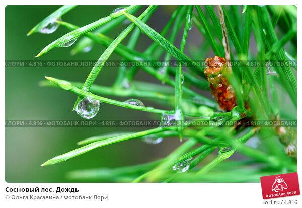 Сосновый лес. Дождь, фото № 4816, снято 8 июня 2006 г. (c) Ольга Красавина / Фотобанк Лори