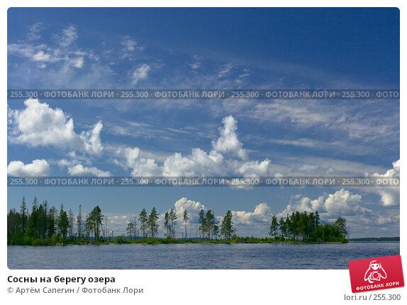 Купить «Сосны на берегу озера», фото № 255300, снято 12 июля 2007 г. (c) Артём Сапегин / Фотобанк Лори