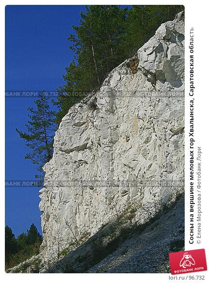 Сосны на вершине меловых гор Хвалынска, Саратовская область, фото № 96732, снято 26 сентября 2007 г. (c) Елена Морозова / Фотобанк Лори