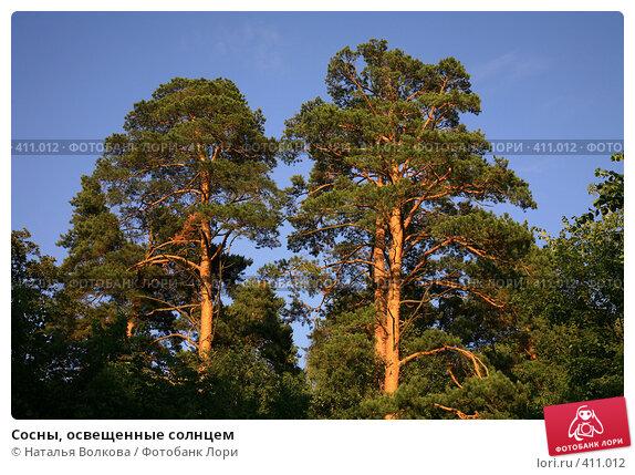 Сосны, освещенные солнцем, фото № 411012, снято 12 июля 2008 г. (c) Наталья Волкова / Фотобанк Лори