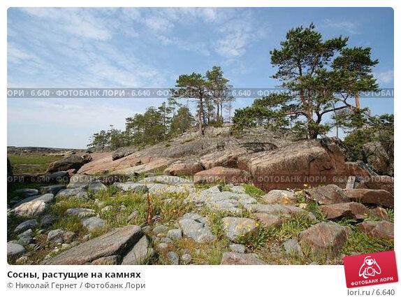 Сосны, растущие на камнях, фото № 6640, снято 8 июля 2006 г. (c) Николай Гернет / Фотобанк Лори