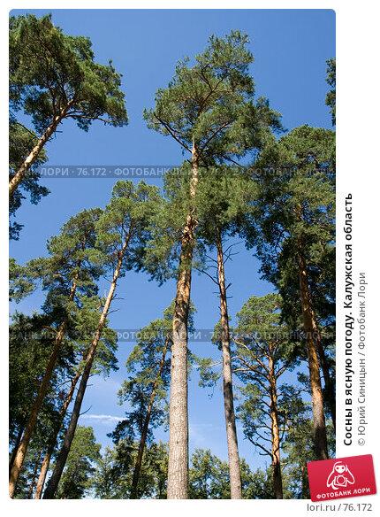 Сосны в ясную погоду. Калужская область, фото № 76172, снято 11 августа 2007 г. (c) Юрий Синицын / Фотобанк Лори
