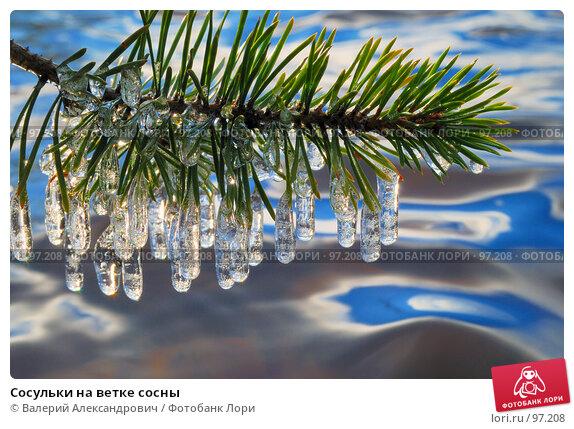 Сосульки на ветке сосны, фото № 97208, снято 10 октября 2007 г. (c) Валерий Александрович / Фотобанк Лори