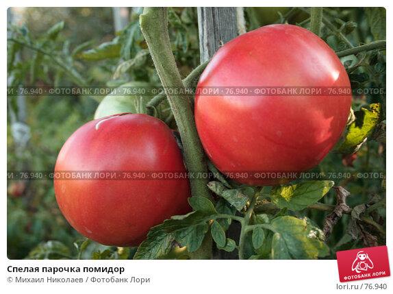 Спелая парочка помидор, фото № 76940, снято 24 августа 2007 г. (c) Михаил Николаев / Фотобанк Лори