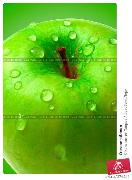 Спелое яблоко, фото № 274244, снято 3 декабря 2007 г. (c) Константин Тавров / Фотобанк Лори