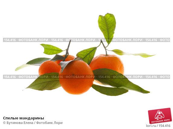 Купить «Спелые мандарины», фото № 154416, снято 19 декабря 2007 г. (c) Бутинова Елена / Фотобанк Лори