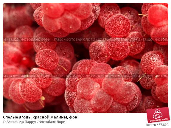 Спелые ягоды красной малины, фон, фото № 87820, снято 5 сентября 2007 г. (c) Александр Паррус / Фотобанк Лори