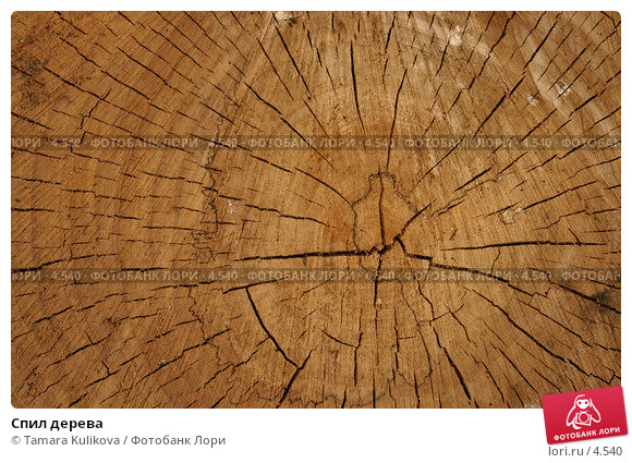 Спил дерева, фото № 4540, снято 9 июня 2006 г. (c) Tamara Kulikova / Фотобанк Лори