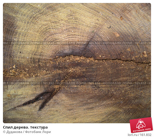 Спил дерева. текстура, фото № 161832, снято 21 июля 2007 г. (c) Дудакова / Фотобанк Лори