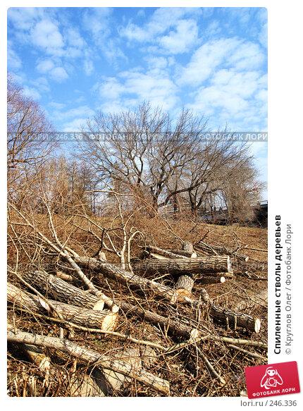 Купить «Спиленные стволы деревьев», фото № 246336, снято 4 апреля 2008 г. (c) Круглов Олег / Фотобанк Лори