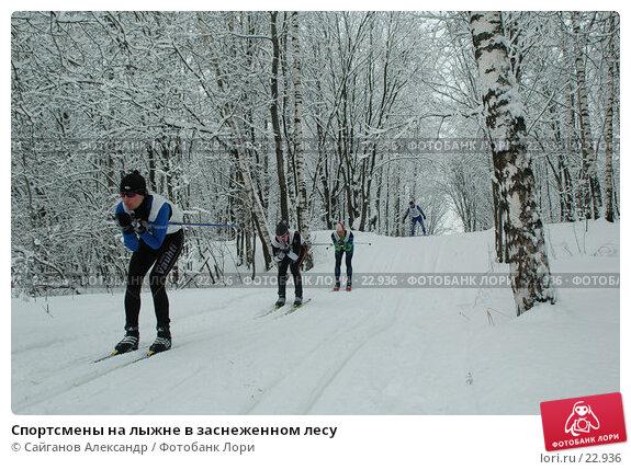 Спортсмены на лыжне в заснеженном лесу, фото № 22936, снято 15 февраля 2007 г. (c) Сайганов Александр / Фотобанк Лори