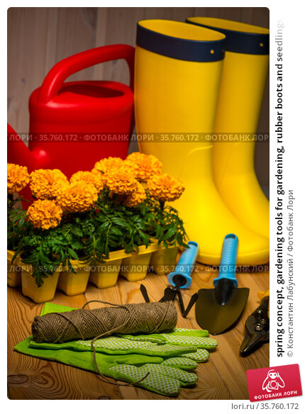 spring concept, gardening tools for gardening, rubber boots and seedlings, watering can, seasonal garden work. Стоковое фото, фотограф Константин Лабунский / Фотобанк Лори