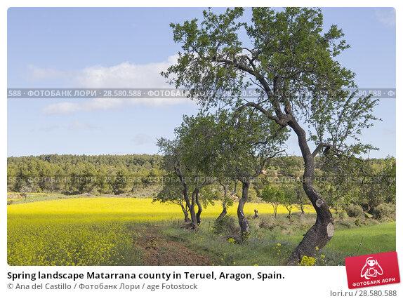 Купить «Spring landscape Matarrana county in Teruel, Aragon, Spain.», фото № 28580588, снято 13 мая 2018 г. (c) age Fotostock / Фотобанк Лори