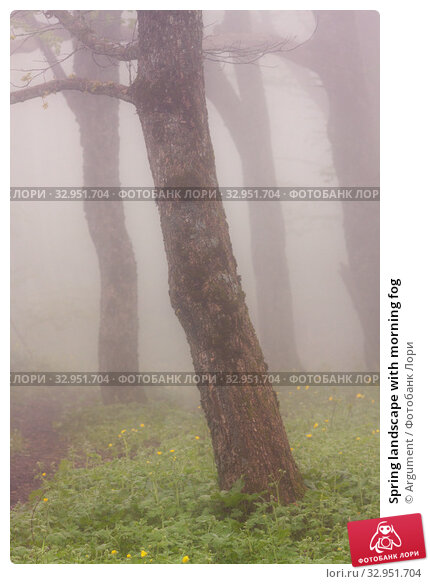 Spring landscape with morning fog. Стоковое фото, фотограф Argument / Фотобанк Лори