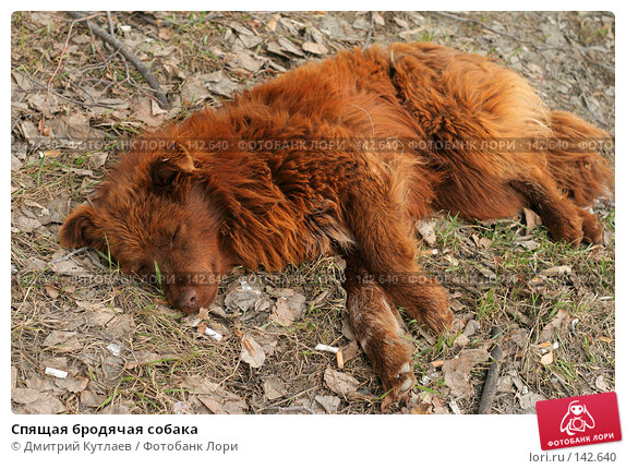 Купить «Спящая бродячая собака», фото № 142640, снято 12 апреля 2007 г. (c) Дмитрий Кутлаев / Фотобанк Лори
