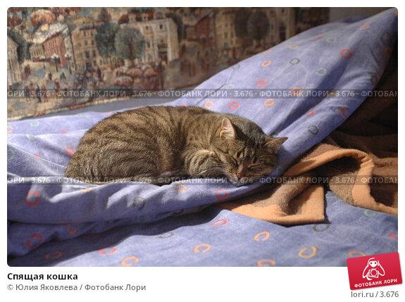 Спящая кошка, фото № 3676, снято 13 мая 2006 г. (c) Юлия Яковлева / Фотобанк Лори