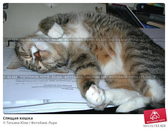 Спящая кошка, фото № 63424, снято 15 июля 2007 г. (c) Татьяна Юни / Фотобанк Лори