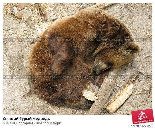 Купить «Спящий бурый медведь», фото № 327856, снято 13 июня 2008 г. (c) Юлия Селезнева / Фотобанк Лори