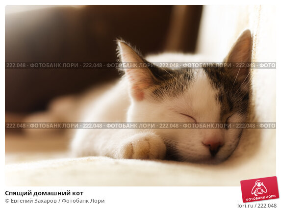Спящий домашний кот, фото № 222048, снято 12 марта 2008 г. (c) Евгений Захаров / Фотобанк Лори