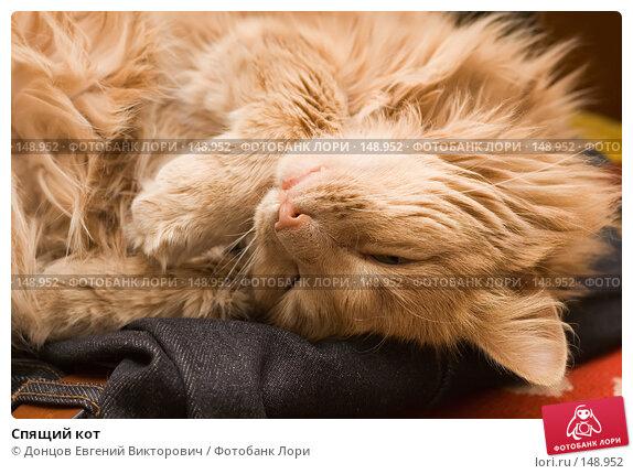 Спящий кот, фото № 148952, снято 2 декабря 2007 г. (c) Донцов Евгений Викторович / Фотобанк Лори