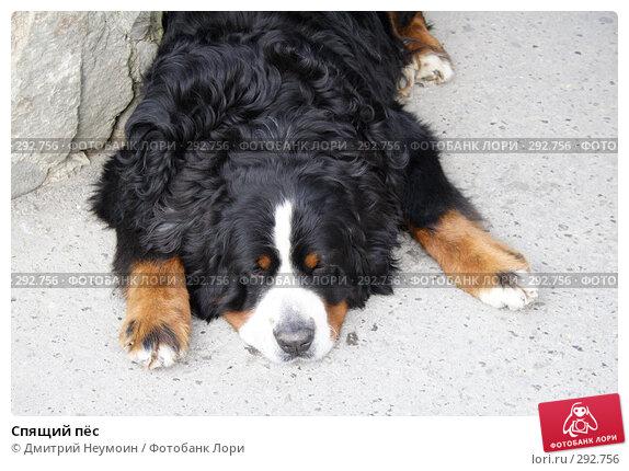 Спящий пёс, эксклюзивное фото № 292756, снято 26 апреля 2008 г. (c) Дмитрий Неумоин / Фотобанк Лори