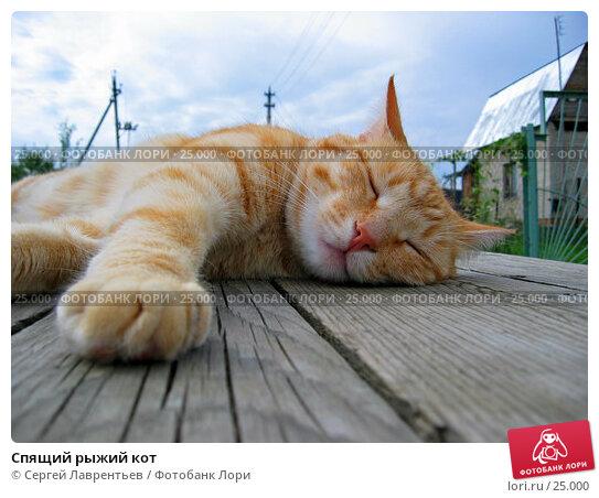 Спящий рыжий кот, фото № 25000, снято 30 мая 2017 г. (c) Сергей Лаврентьев / Фотобанк Лори