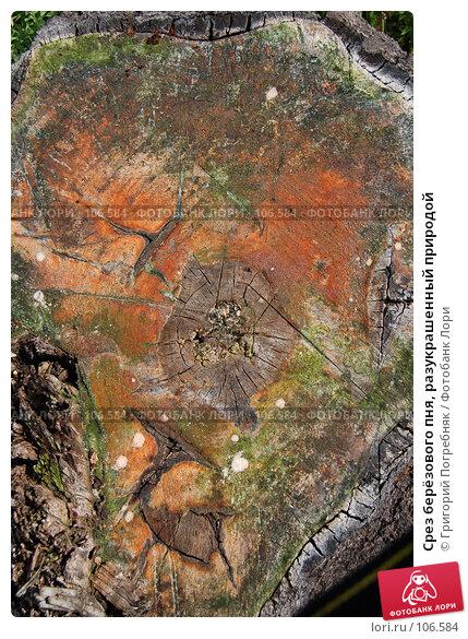 Срез берёзового пня, разукрашенный природой, фото № 106584, снято 3 августа 2007 г. (c) Григорий Погребняк / Фотобанк Лори