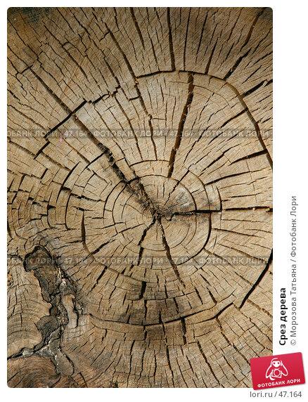 Срез дерева, фото № 47164, снято 24 мая 2007 г. (c) Морозова Татьяна / Фотобанк Лори