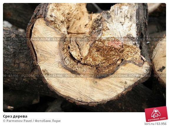 Срез дерева, фото № 63956, снято 1 июля 2007 г. (c) Parmenov Pavel / Фотобанк Лори