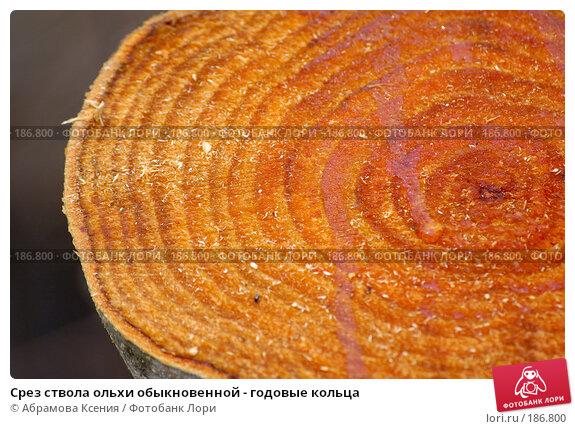 Срез ствола ольхи обыкновенной - годовые кольца, фото № 186800, снято 28 апреля 2006 г. (c) Абрамова Ксения / Фотобанк Лори