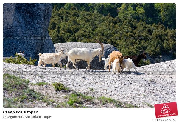 Купить «Стадо коз в горах», фото № 287152, снято 26 апреля 2008 г. (c) Argument / Фотобанк Лори