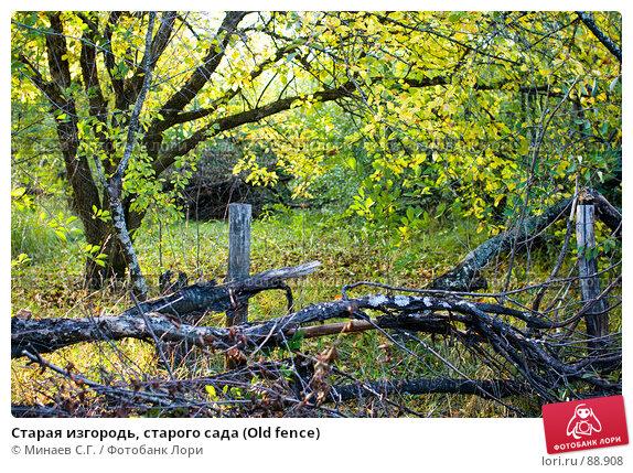 Старая изгородь, старого сада (Old fence), фото № 88908, снято 22 сентября 2007 г. (c) Минаев С.Г. / Фотобанк Лори