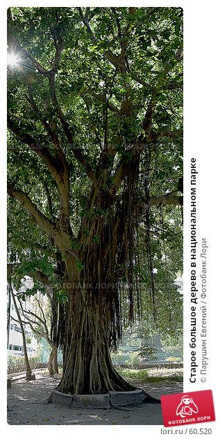 Купить «Старое большое дерево в национальном парке», фото № 60520, снято 22 апреля 2018 г. (c) Парушин Евгений / Фотобанк Лори