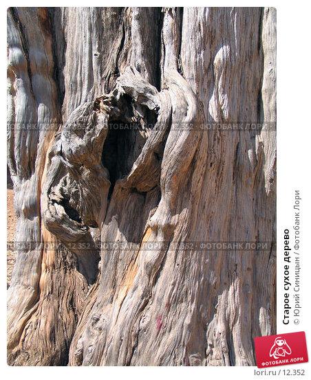 Старое сухое дерево, фото № 12352, снято 29 сентября 2006 г. (c) Юрий Синицын / Фотобанк Лори